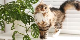 Rośliny bezpieczne dla kota – co można spokojnie wybrać do mieszkania?
