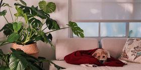 Jak urządzić mieszkanie z myślą o psie?