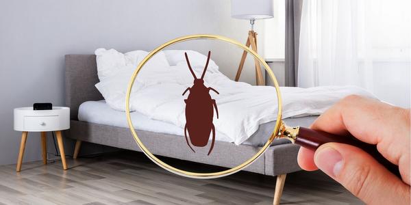 Szkodniki w mieszkaniu – jak sobie z nimi poradzić?
