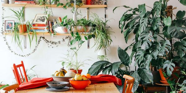 Jakie rośliny wybrać, by stworzyć z domu osobistą oazę?