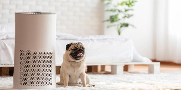 Jaki oczyszczacz powietrza wybrać do mieszkania?