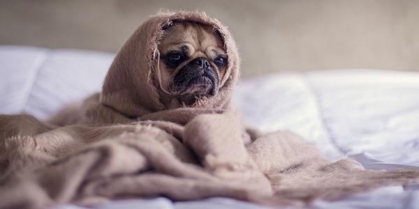 Jak zapewnić psu wygodne legowisko?