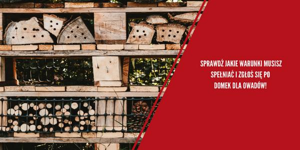 Zbudujmy największy dom dla owadów na świecie – włącz się w akcję PZFD